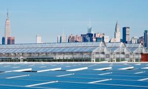 Gotham Greens Headquarters, Brooklyn, New York