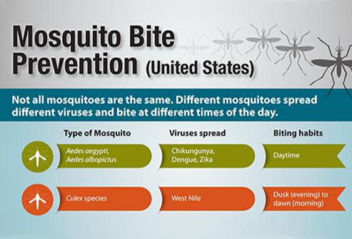 zika-virus-mosquito-bite-transmission