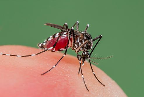 zika-virus--mosquito-in-the-us