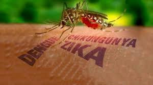 mosquito-3-diseases